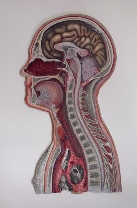 Oil painting of medical engraving of cross section through head and chest.
